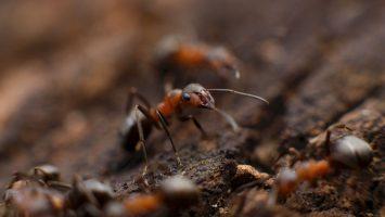 58 formiche