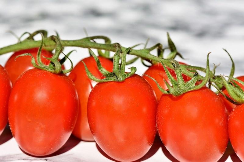 Perche le foglie dei pomodori si arricciano