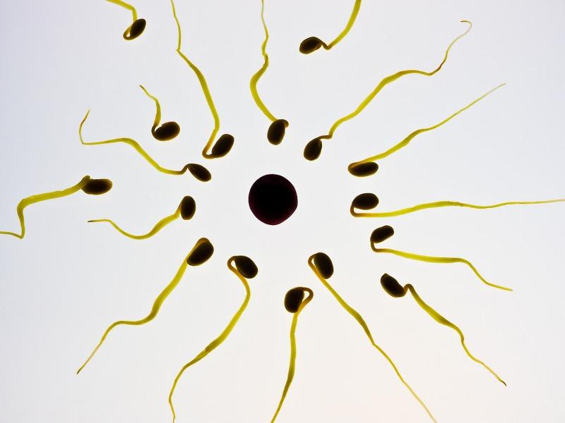 Stick di ovulazione canadesi, ilnuovo test precoce di gravidanza_