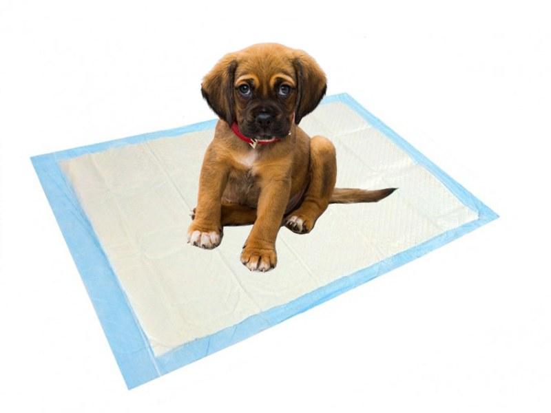 cucciolo di cane fa bisogni sulla traversina
