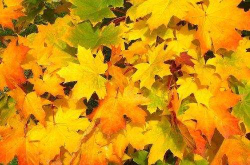 Perché le foglie delle piante ingialliscono